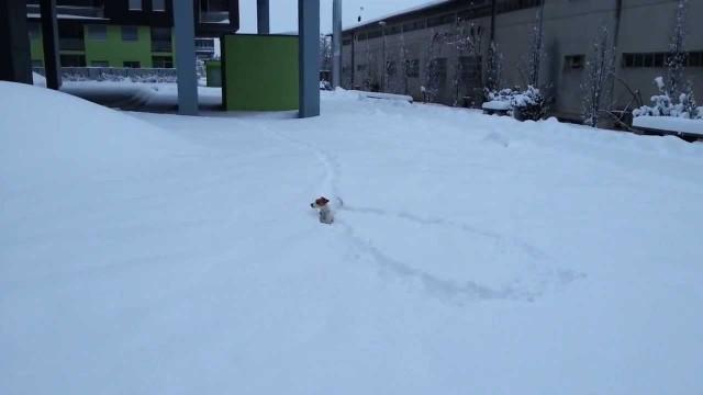 Un chien cherche sa balle dans la neige