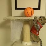 Des chats jouent au basket !
