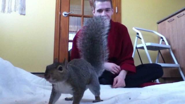 Un écureuil joue avec son maître !