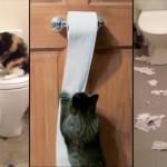 Compilation de chats détruisant du papier toilette