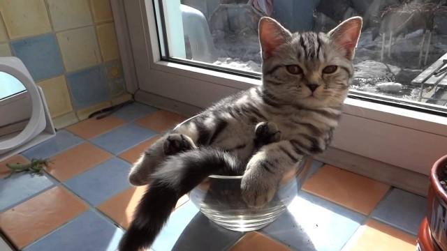 Un chaton dort dans un verre