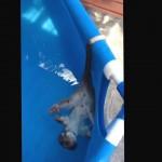 Un opossum nage sur le dos dans une piscine gonflable