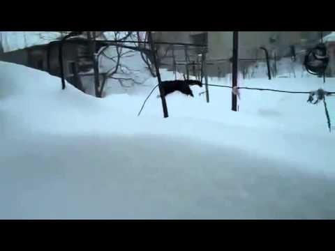 Un chat marche dans une très grosse couche de neige