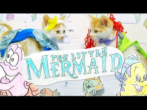 La petite sirène rejoué par des chatons !