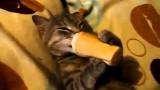 Ce chat adore la glace