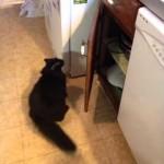 Un chat malin trouve le moyen de monter sur un meuble