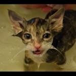 Compilation de vidéos de chats mouillés