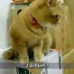Un chat s'énerve contre son distributeur de croquettes