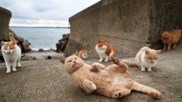 L'ile aux chats