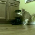 Un chat se bat contre un distributeur de croquettes