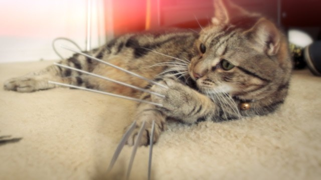 Le chat Wolverine