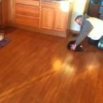 Faire du curling avec un chat