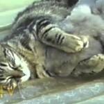 Un lapin et un chat dorment ensemble