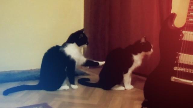 Un chat s'excuse auprès d'un autre chat