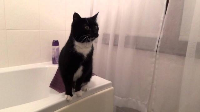 Un chat pose devant un mirroir