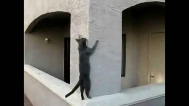 Des chats font du Parkour