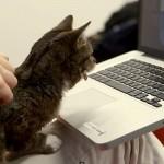 Lil Bub le chat regarde des chats sur Vine. Et c'est drôle !