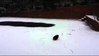 Un Chat Découvre la Neige pour la Première Fois