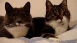 Comment Deux Chats Parlent ?