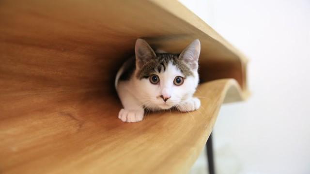Une Table designée pour les Chats (et les Humains)