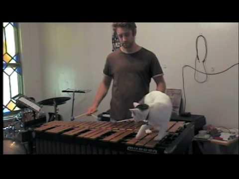 Voilà Pourquoi les Chat peuvent vous Empêcher de Devenir Musiciens