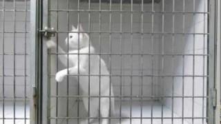 Regardez comment ce chat s 39 enfuit d 39 une bo te ferm e cl - Comment ouvrir une porte fermee a cle avec un trombone ...