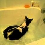 Les chats AIMENT l'eau..