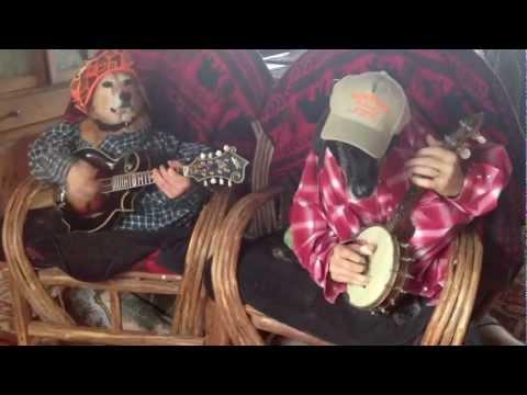 Des Chiens Jouent de la Musique Country (et c'est Drôle)