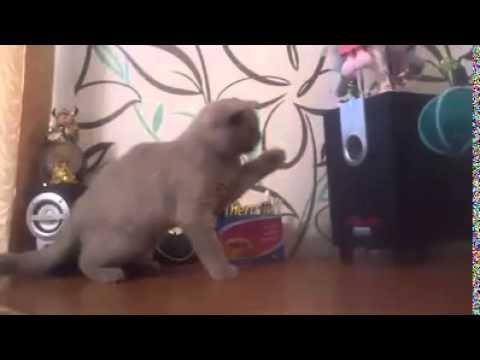 Un Chat essaye d'Attraper le Son des Basses d'une Enceinte !