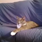 La Journée d'un Chat, ça donne… ça