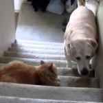 Un Chien a Super Peur d'un Chat ! Réussira-t-il à passer ?