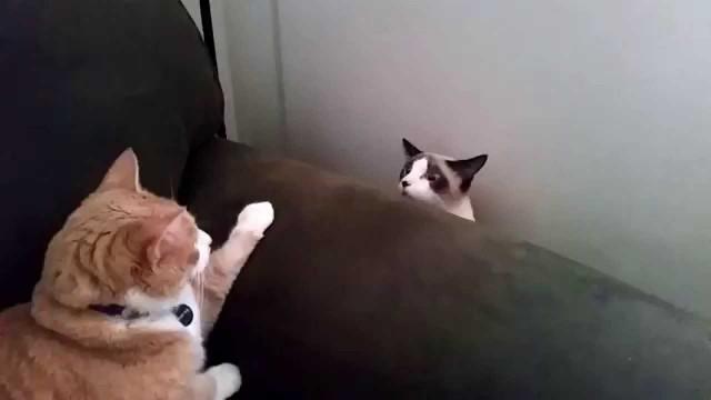Pardon… Ce Chat ne Voulait pas Déranger