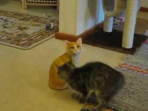 Un Chaton attaque un Chat en Céramique