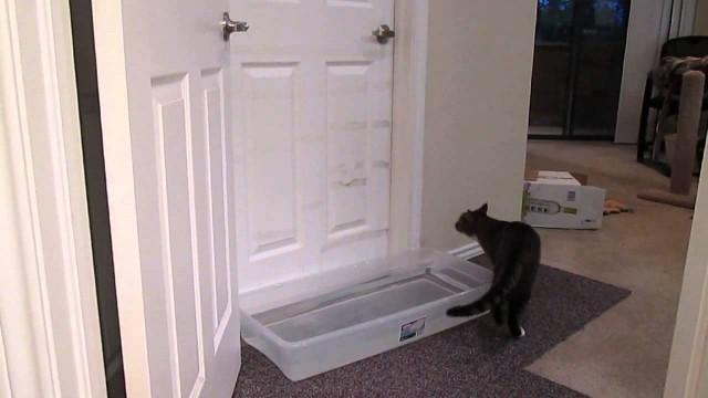 Un Chat apprend à Ouvrir les Portes