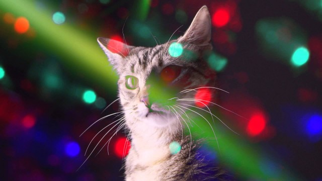 Meow Mix : Des Chats mixent et Dansent en Boîte