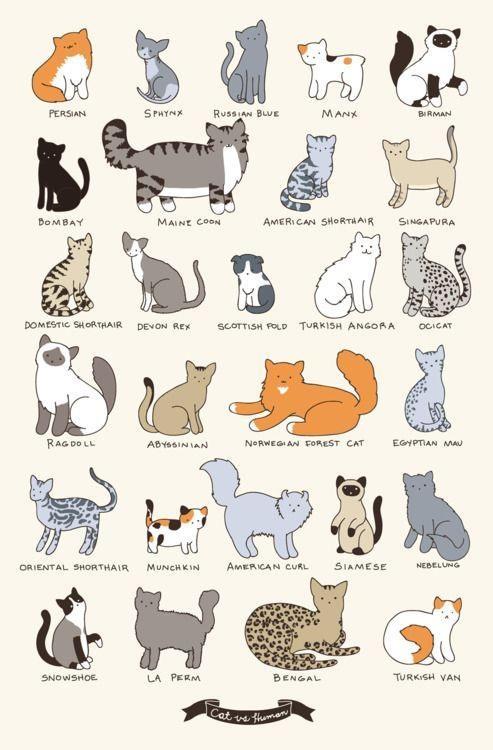 La Liste des Races de chats