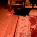 Un Chat avec un Pointeur Laser sur la Tête