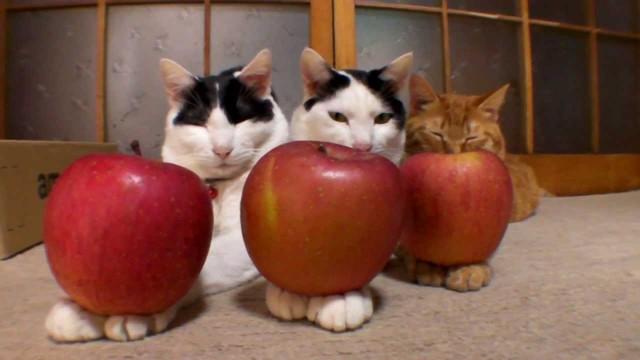 Ces Chats n'en ont juste Rien à Faire de vous