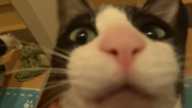 Un Chat trop Heureux de Revoir son Maître