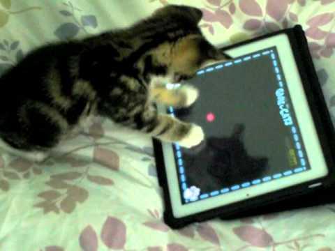 Un Chaton Joue à l'iPad !