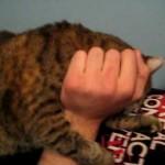 Ce Chat fait des Bruits Bizarres quand on le Gratte