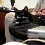 Comment Réagit un Chat devant un Reportage Animalier ?