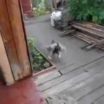 Dresser son Chien à Faire Rentrer le Chat !