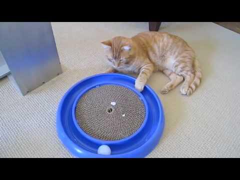 Le Meilleur Jouet pour Chat !