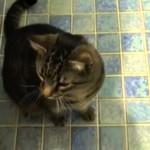 Bob le Chat obéit au Doigt et à L'oeil !