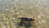 Un Chat Nage dans la Mer !