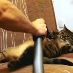 Les Chats adorent se faire… Aspirer…
