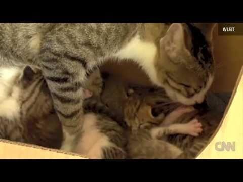 Une Maman Chat Adopte un Écureuil et lui Apprend à Ronronner !