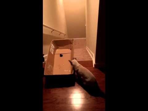 Des Chats Glissent dans une Boîte en Carton :)))