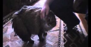 Le chat qui dit non non non non !